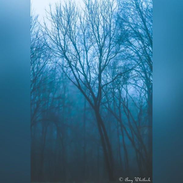 2020 Nature: Everything Trees Photo Slideshow