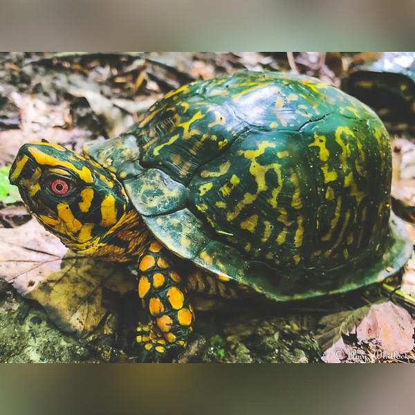 2020 Nature: Creatures Photo Slideshow