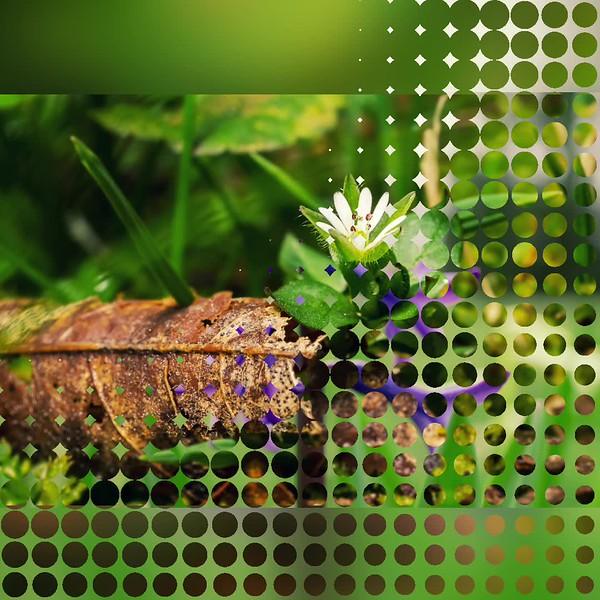 2018 Nature: Flowers & Wildflowers Photo Slideshow