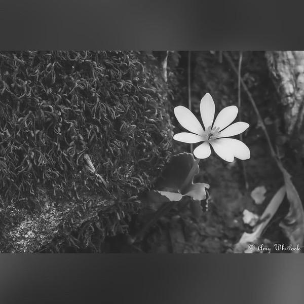 2020 Nature: Flowers & Wildflowers Photo Slideshow