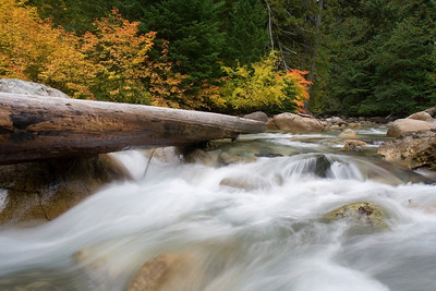 Autumn at a stream on the North side of the Cascades loop