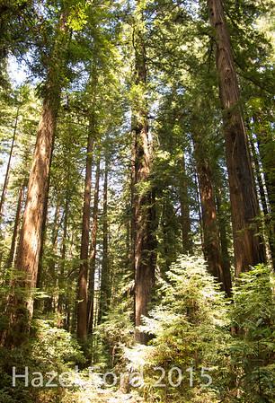 US Pacific Northwest 2015