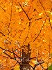 Autumn colors in Northern Michigan by Petoskey Photographer, Sandra Lee
