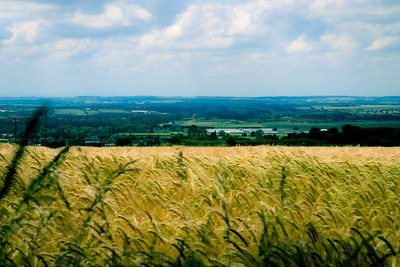 Corn Fields looking over Caister Lincolnshre