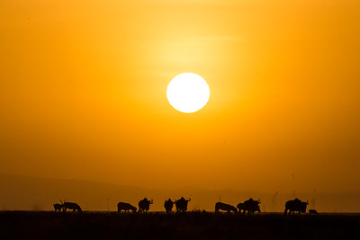 Migration Dawn Serengeti
