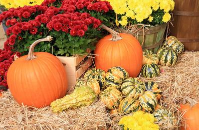 Pumpkins, Gourds, Mums