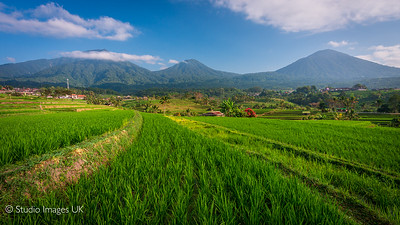 UNESCO Jatiluwih rice terraces and plantation in Bali