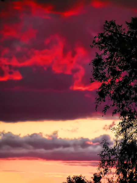 Pink and Purple Clouds Photo Print