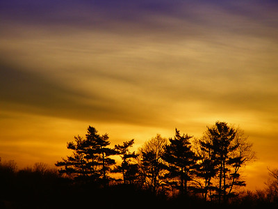 Family of silhouette trees with a beautiful orange and purple sunset sky.