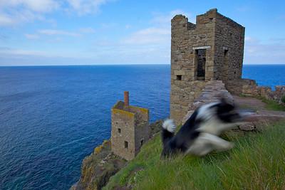 Botallack Ghost Dog Cornwall