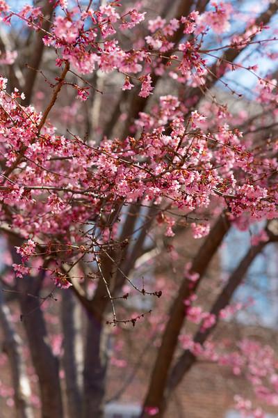 Flowers in Delaware