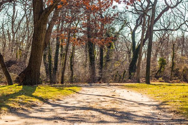 Valley Stream Park Trees