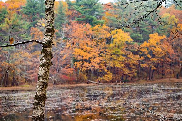 Fall Massachusetts Landscape