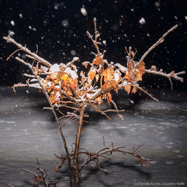 Snow falls in the middle of the night