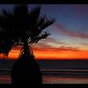 Pacific Beach Palm