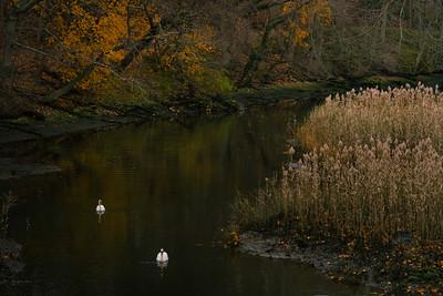two_swans_stony_brook