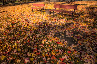 Invitation to Sit in the Fall