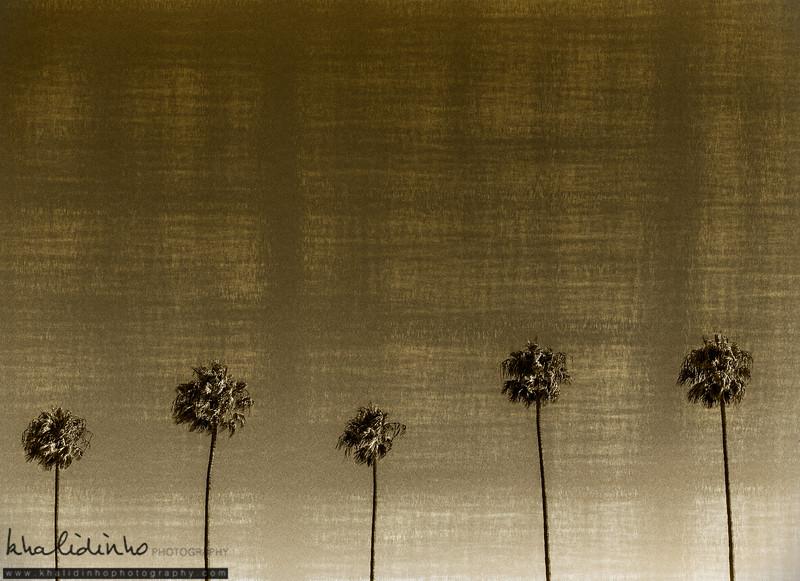 L.A Golden Palms
