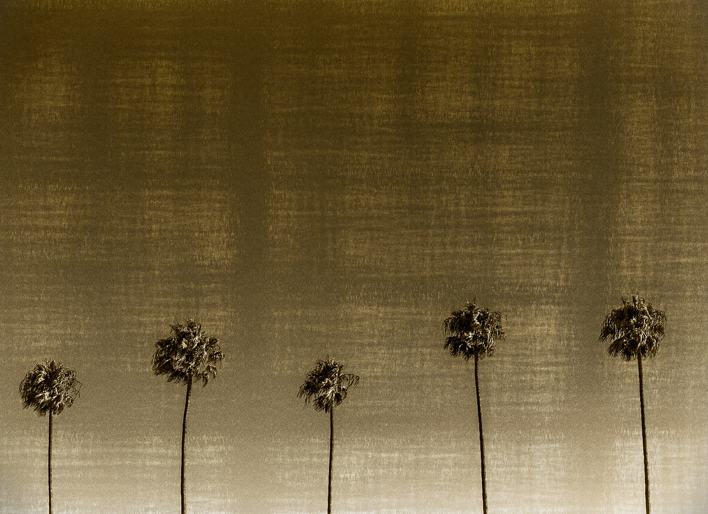 L.A Golden Palms