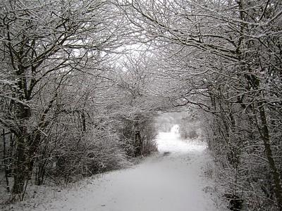 Snowy Bower