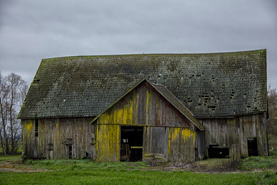 Old Barn Yellow Lichen Burlington WA
