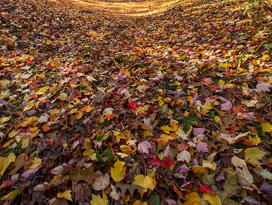 Fall Carpet of Leaves EJ Roberts Park