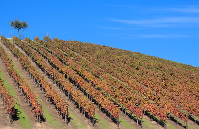 Trilogy Vineyards