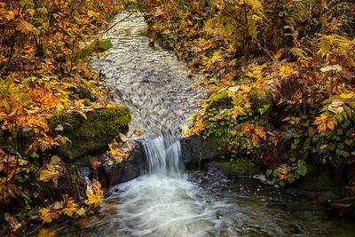 O Creek Small Waterfall Closeup Fall Leaves