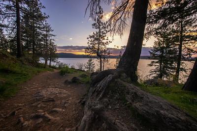 Lake CDA Sunset Trail Ponderosa Pine Root Foreground 5-2-19