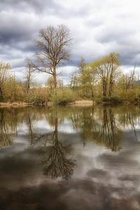 Tall Tree Spring Reflection Portrait
