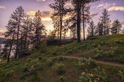 Hillside Sunflowers Arrowleaf Balsamroot Lake CDA Sunset 5-2-19