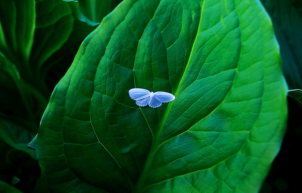 Moth in the Green