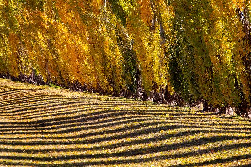 Autumn Lines Yellow