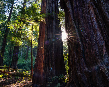 BIG BASIN SUNRISE | BIG BASIN REDWOOD STATE PARK - CALIFORNIA