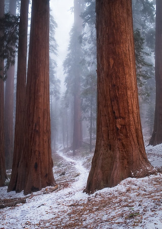 Redwood Canyon in Winter