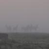 Elk Foggy Dawn Silhouette