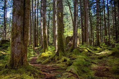 Two Roads Yellow Wood Middle Fork Forest