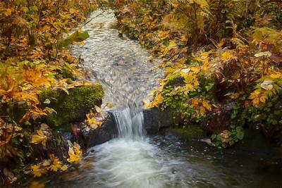 O Creek Small Waterfall Closeup Monet Impression Autumn