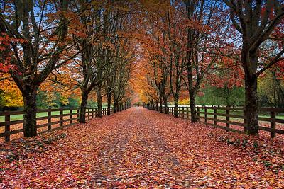 Autumn Beauty Driveway Landscape