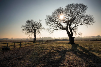 2 Winter trees basking in the morning sun, By David Stoddart