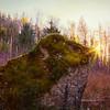 Mossy Boulder Ferns Winter Afternoon Sunstar Monet Impression