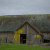 Old Barn Yellow Lichen Burlington WA - Monet Effect