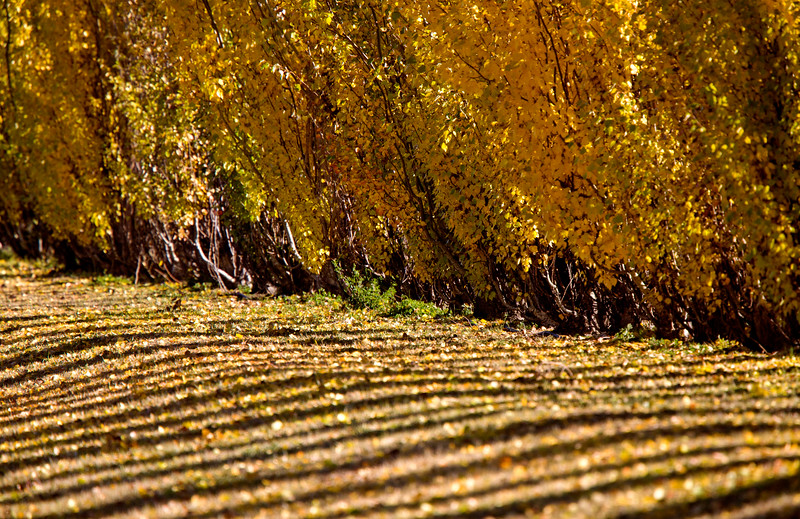 Autumn Lines Yellow