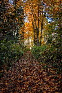 Uphill Trail Fall