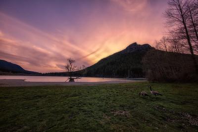 A Pair of Geese Watching the Sunset at Rattlesnake Lake