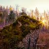 Mossy Boulder Ferns Winter Afternoon Sunstar