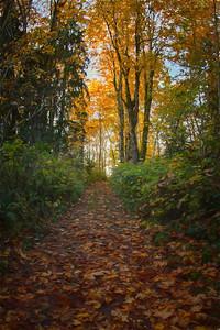 Uphill Trail Fall Monet Impression