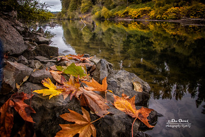 Fall Leaves Snoqualmie River Reflection Landscape Early Morning