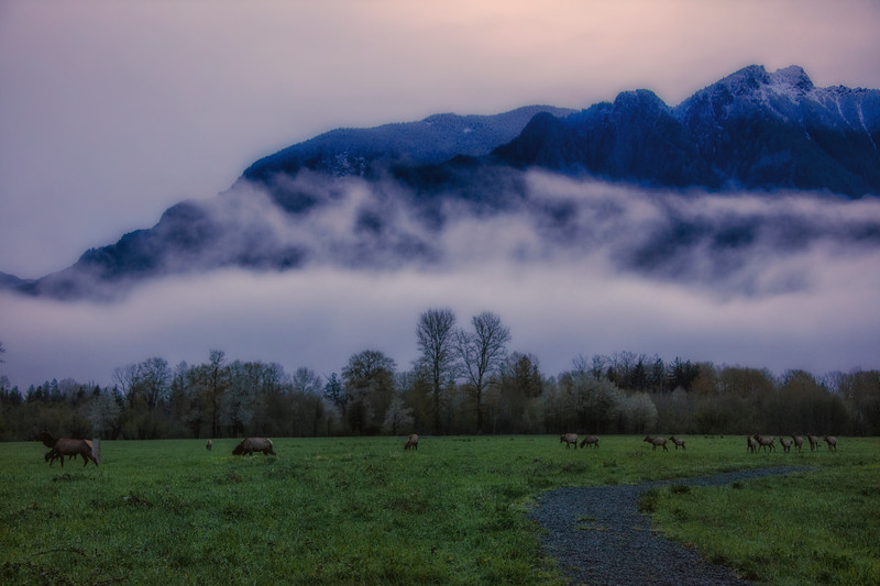 Elk Misty Morning Dawn Mount Si
