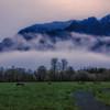 Elk Misty Morning Dawn Mount Si